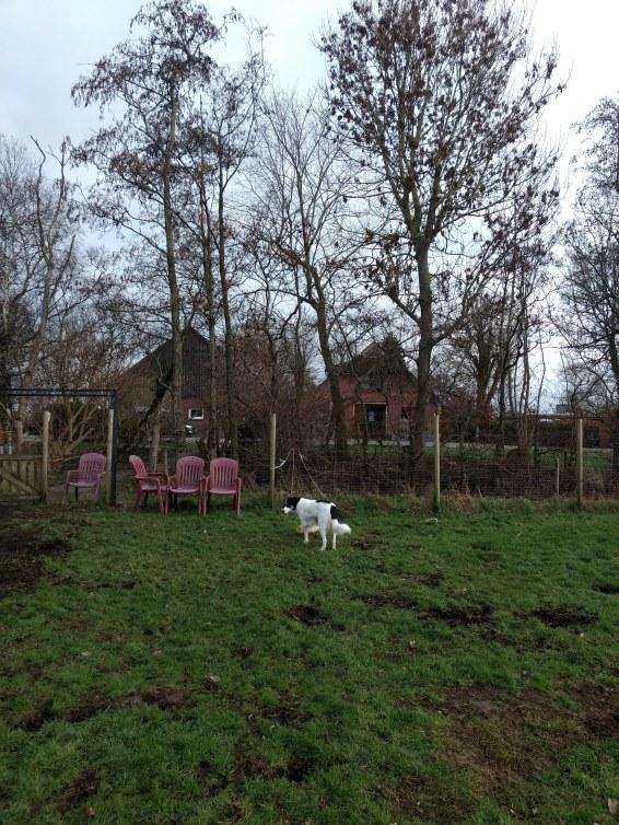 Die Hundewiese auf Hoepkens Hof.