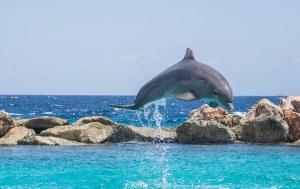 dolphin-906182__340