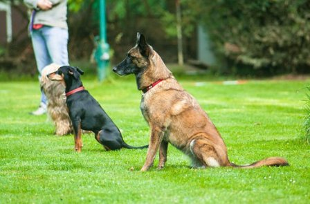 Hund_sitzt1