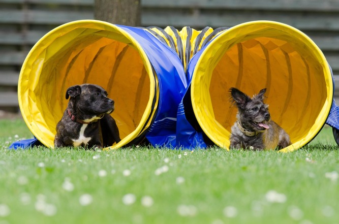 two-dogs-in-the-tunnel-750598_1280