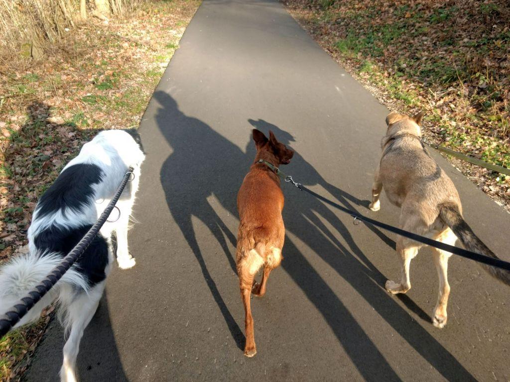 Das sind wir drei: Tami, der rehbraune Podenco-Mix, in der Mitte, links davon ich, schwarzweiß und puschelig, und rechts John-Boy, ein Labrador-Mix in einem sehr schönen Graubraun.