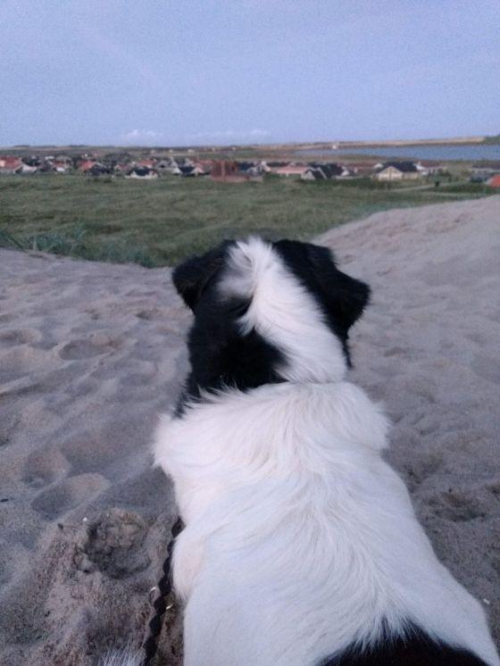 Frollein Frieda auf der Düne mit Blick auf Vejlby Klit.